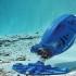 Пылесосы для очистки бассейнов — стоимость, популярные модели, отзывы